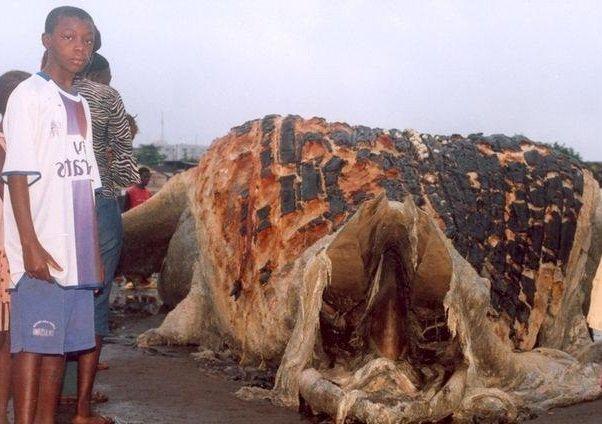 Гигантские морские чудовища