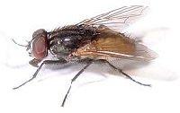 Какие бывают мухи