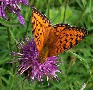 Как правильно находить и коллекционировать бабочек