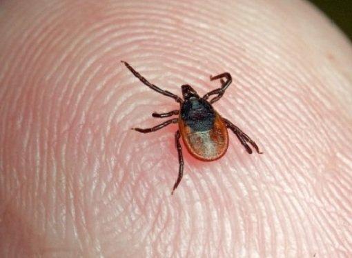 Насекомые насекомые 6 лапок где