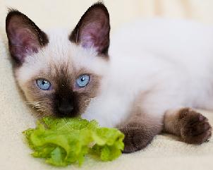 Меню для кошки — правильное питание кошек