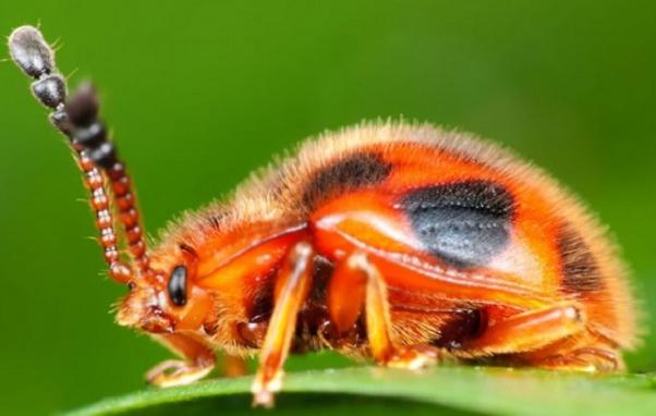 Необыкновенные способности насекомых и животных