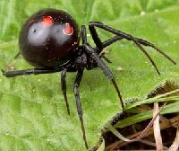 Все о пауках опасные и ядовитые пауки