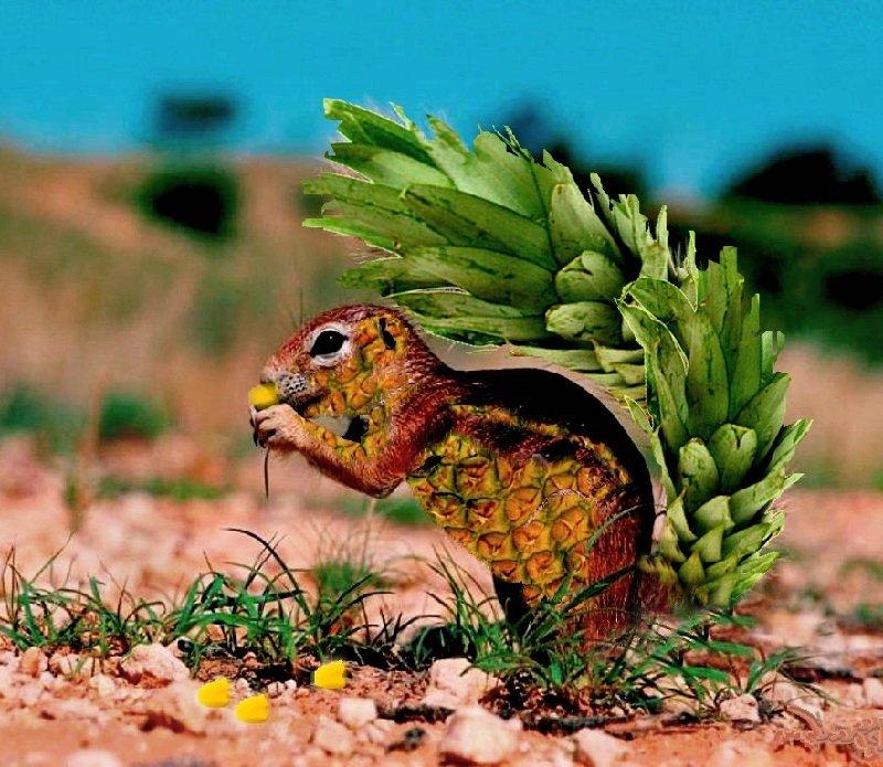 Единство животных и растений в природе планеты
