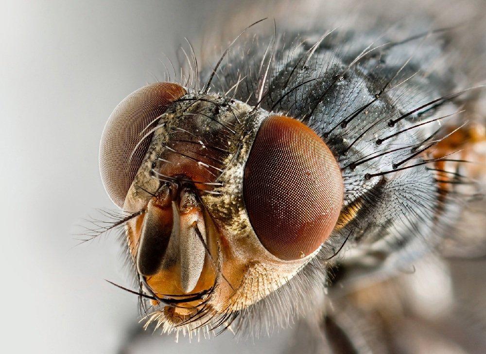 Почему мухи опасны для здоровья человека
