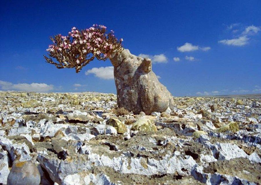 Самый крупный полуостров на земле Аравийский