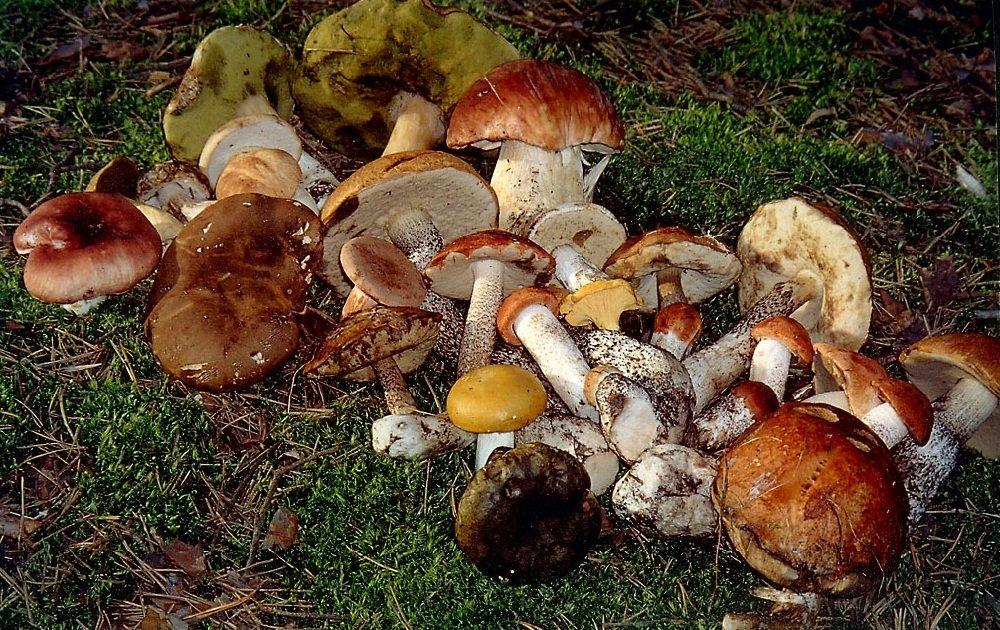 Время и места роста грибов