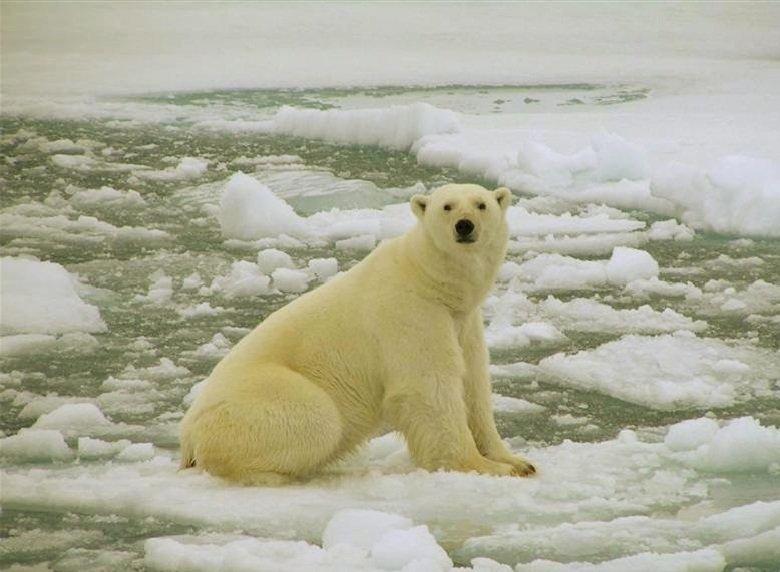 Арктическое потепление и таяние ледников