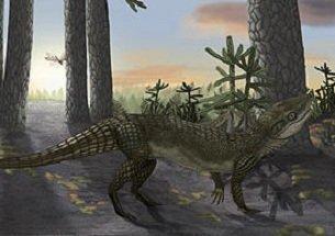 Паказуха Капила крокодил полу-млекопитающее