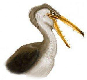 Самая большая птица земли