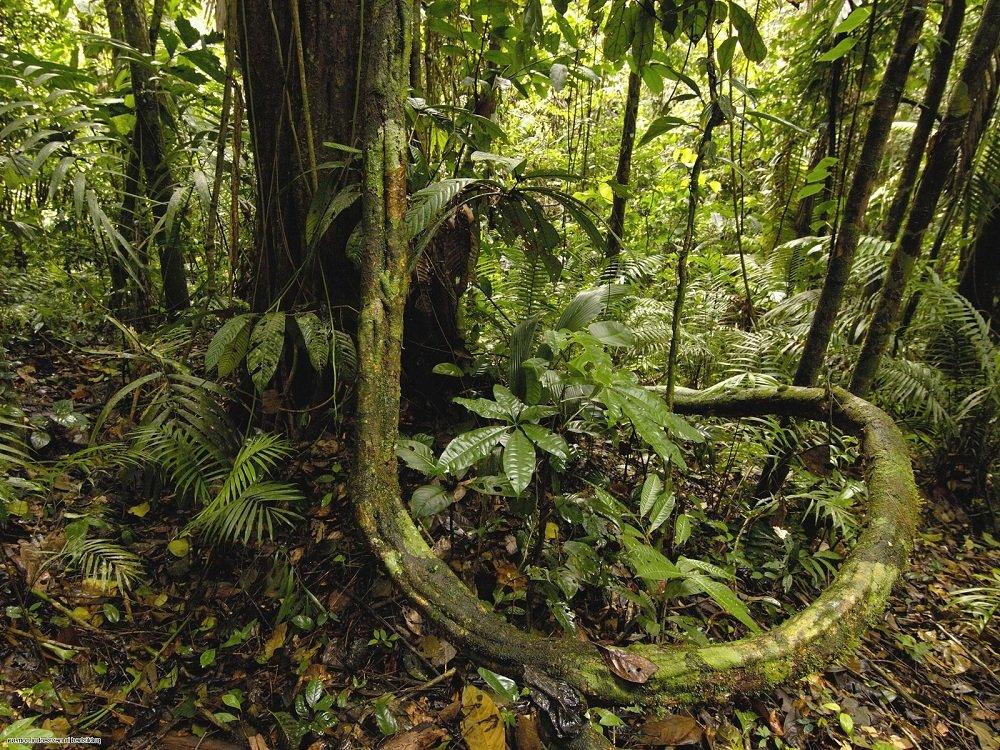 Тропические леса Напо самый биоразнообразный регион