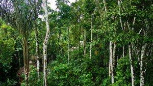 Тропические леса Напо