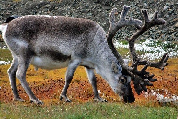 Флора и фауна Северной части России