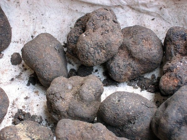 Грибы трюфели — описание видов, фото и видео