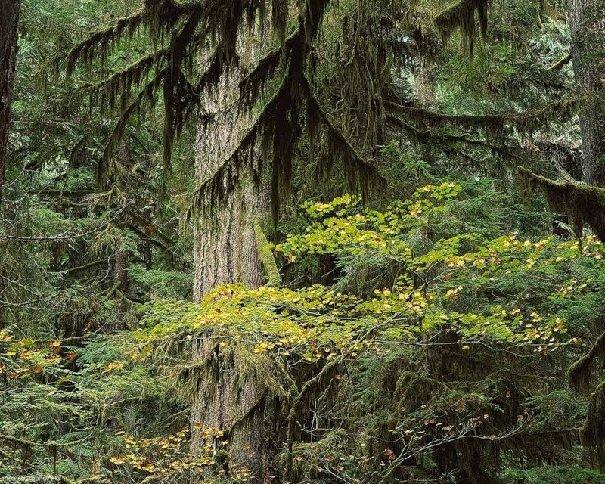 Характеристика Южнотаежных лесов России