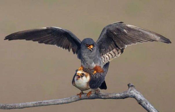 От кого произошли птицы