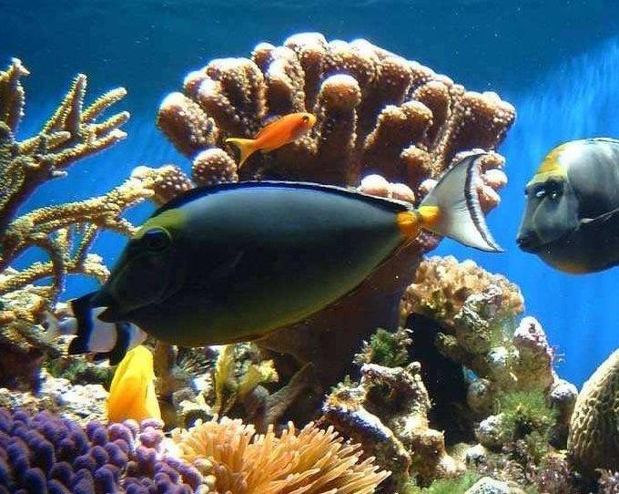 Этажи океана — подробное описание