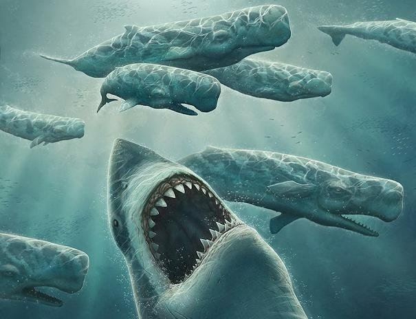 Гиганты мирового океана — акулы, морские дьяволы, манты, скаты