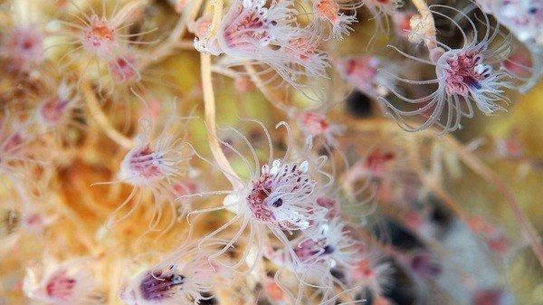 Микроскопические существа океана