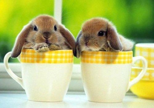 Декоративные кролики содержание дома