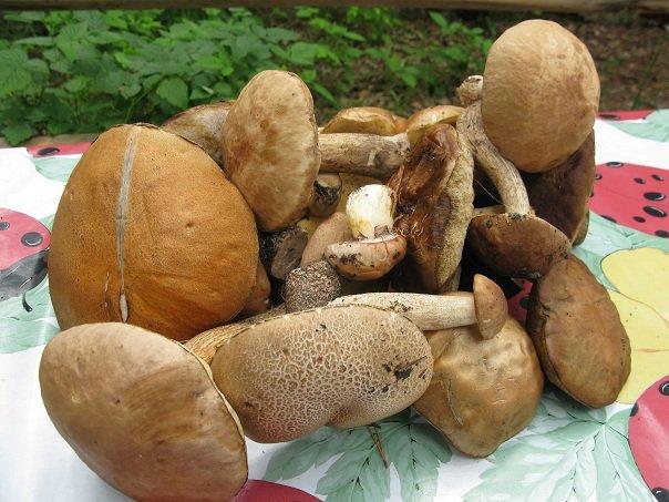 Как отличить ядовитый гриб от съедобного