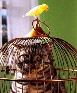 Как правильно наказывать кошку - наказание кошки