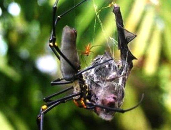 Об огромных пауках