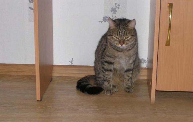 Как правильно наказывать кошку – 7 способов перевоспитания кота.