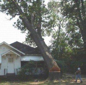 Как свалить дерево в определенное место