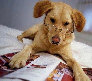 Какая порода собак считается самой умной