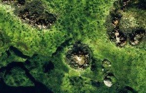 Микроорганизмы в природе нашей планеты