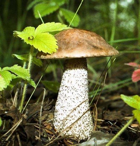 Чем отличаются грибы от растений