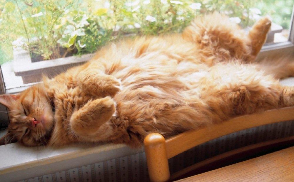 Действие валерианы на кошек