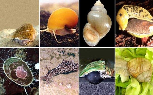 Где обитают моллюски мягкотелые беспозвоночные