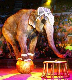 Животные в цирке - жестоко и мучительно!