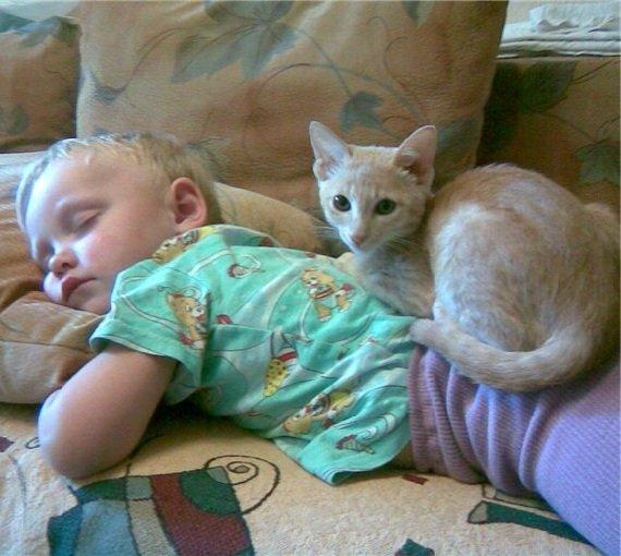 Кототерапия – как вылечиться с помощью кошки