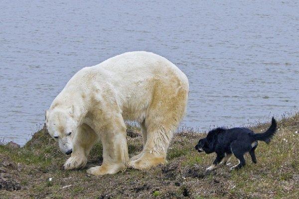 Остров Белый в Норвегии — самый чистый в мире!