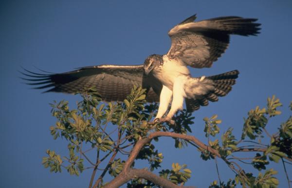 Хищные птицы фото самых страшных - Боевой орел