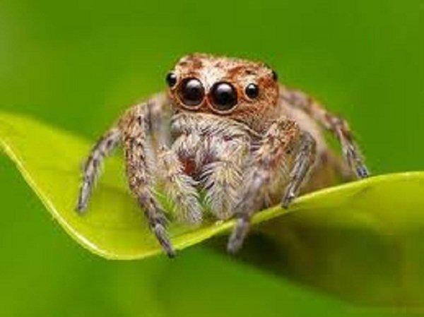 Глаза животных фото - пауки Огры
