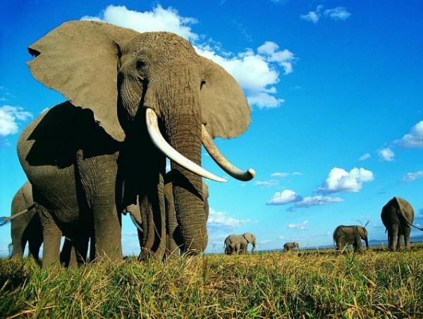 Самые сильные животные в мире фото - слон