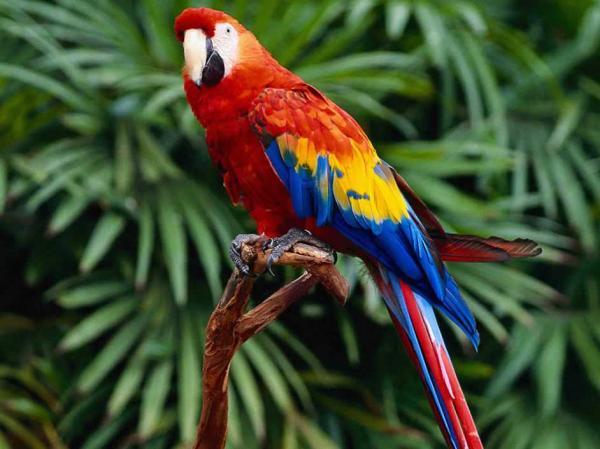 Самые дорогие животные фото - попугай ара