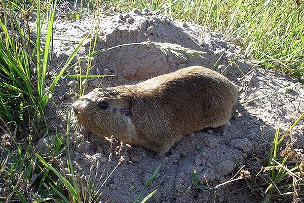 Подземные животные - кто живет под землей фото - туко-туко