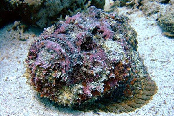 Самые ядовитые животные в мире фото - рыба-камень