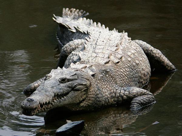 Самые опасные животные в мире фото - Крокодил