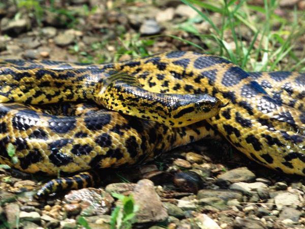 Подземные животные - кто живет под землей фото - пятнистая змея
