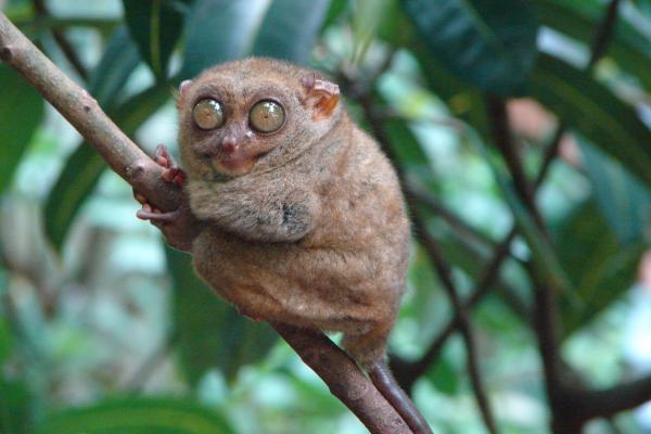 Самые странные животные фото - Долгопят