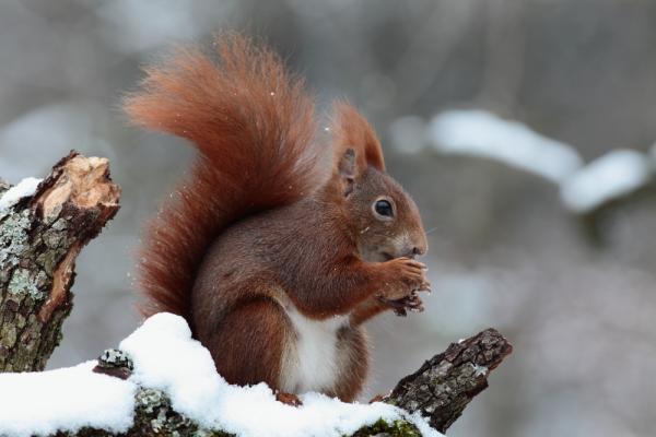 Самые умные животные в мире фото - Белки