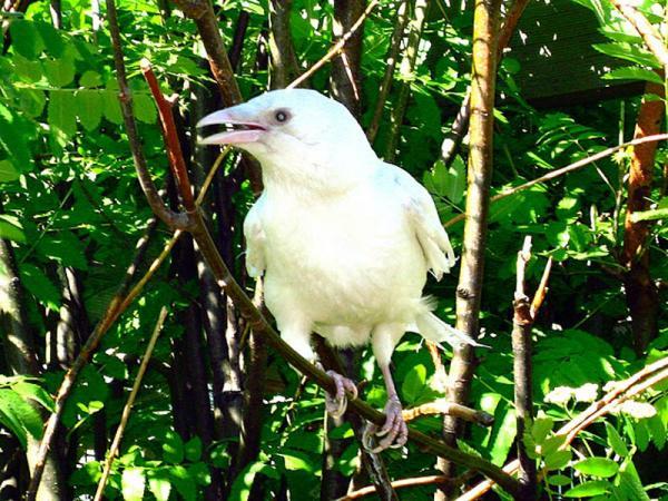 Необычный окрас животных фото - белая ворона