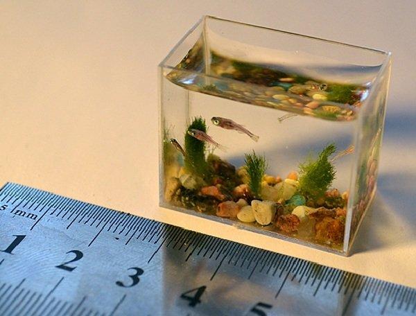 Самые маленькие животные в мире фото - Маленькая рыбка