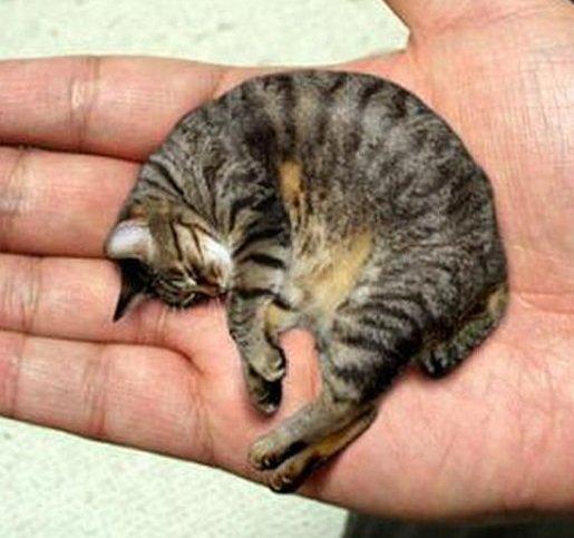 Самые маленькие животные в мире фото - Маленький котик
